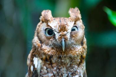 post-11112-angry-owl-nmyn