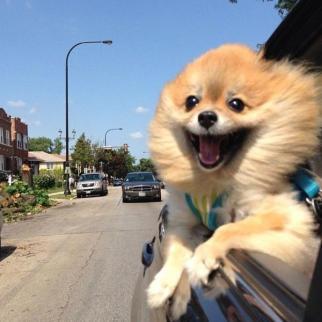 ridiculous-funny-animals-car-dog